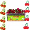 Hollywood Chewing gum 2 FRESH Menthe Forte Menthe Fraiche